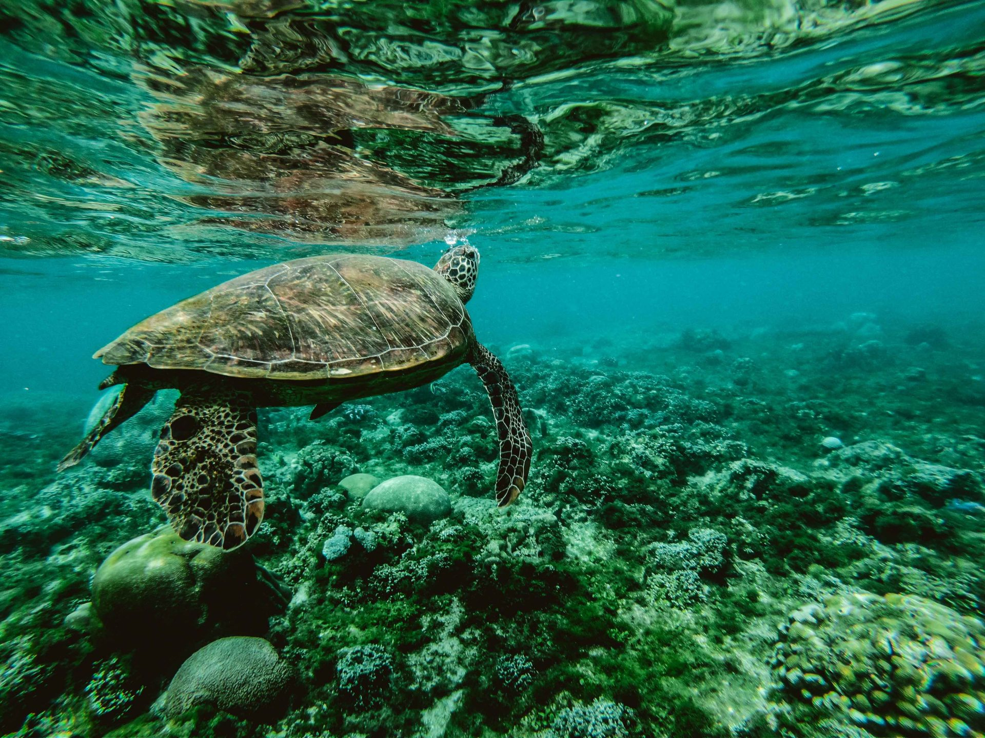 Travel to Australia - The Great Barrier Reef
